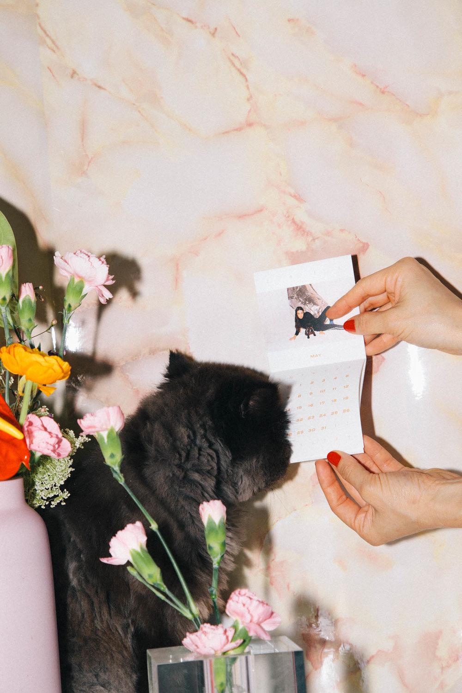 IMG_6842-cat-calendar-puno-goodsgang-krizia-2018-3.jpg