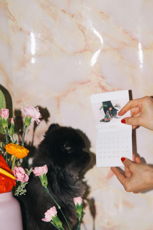IMG_6849-cat-calendar-puno-goodsgang-krizia-2018-3.jpg