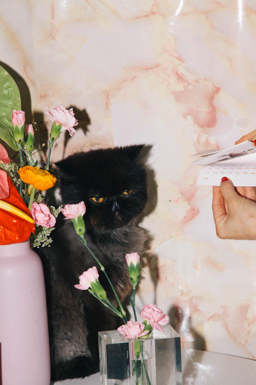 IMG_6852-cat-calendar-puno-goodsgang-krizia-2018-3.jpg