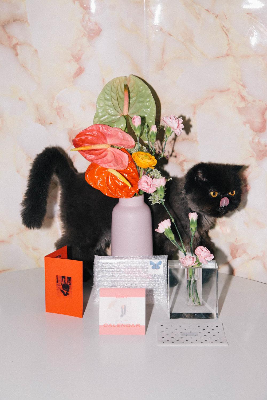 IMG_6794-cat-calendar-puno-goodsgang-krizia-2018-3.jpg