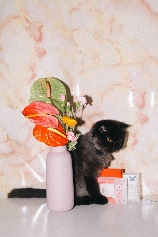IMG_6870-cat-calendar-puno-goodsgang-krizia-2018-3.jpg