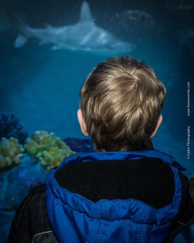Aquarium-81.jpg