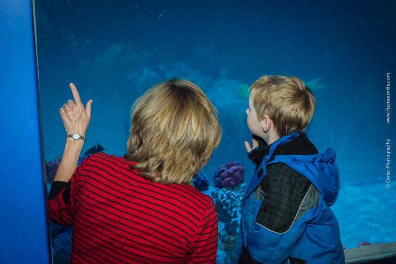Aquarium-78.jpg