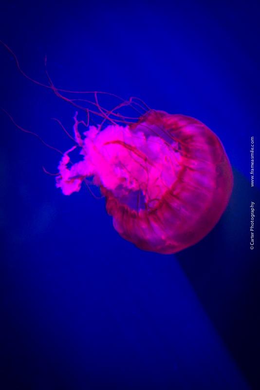 Aquarium-111.jpg