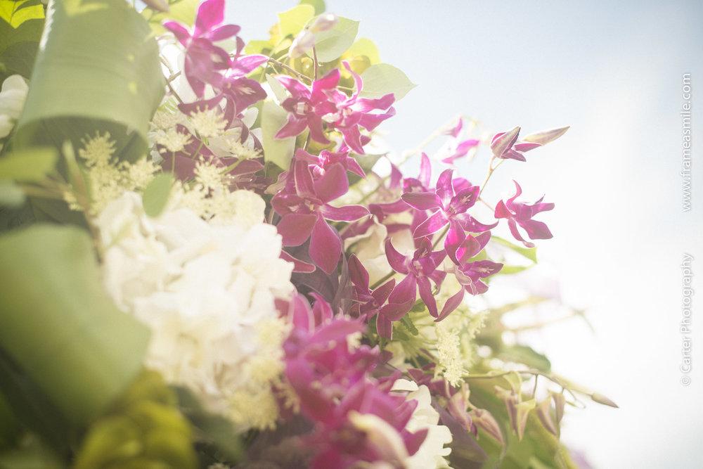 frameasmile.com carter photo solitude--2.jpg