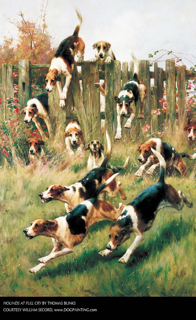 hounds at full cry.jpg