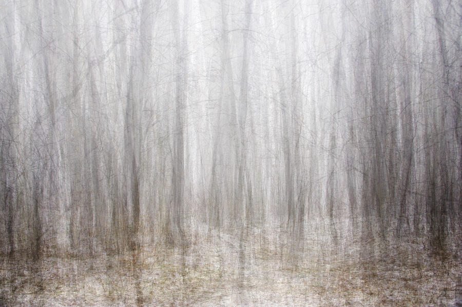 Winter Forest Photograph by Tomasz Wieja