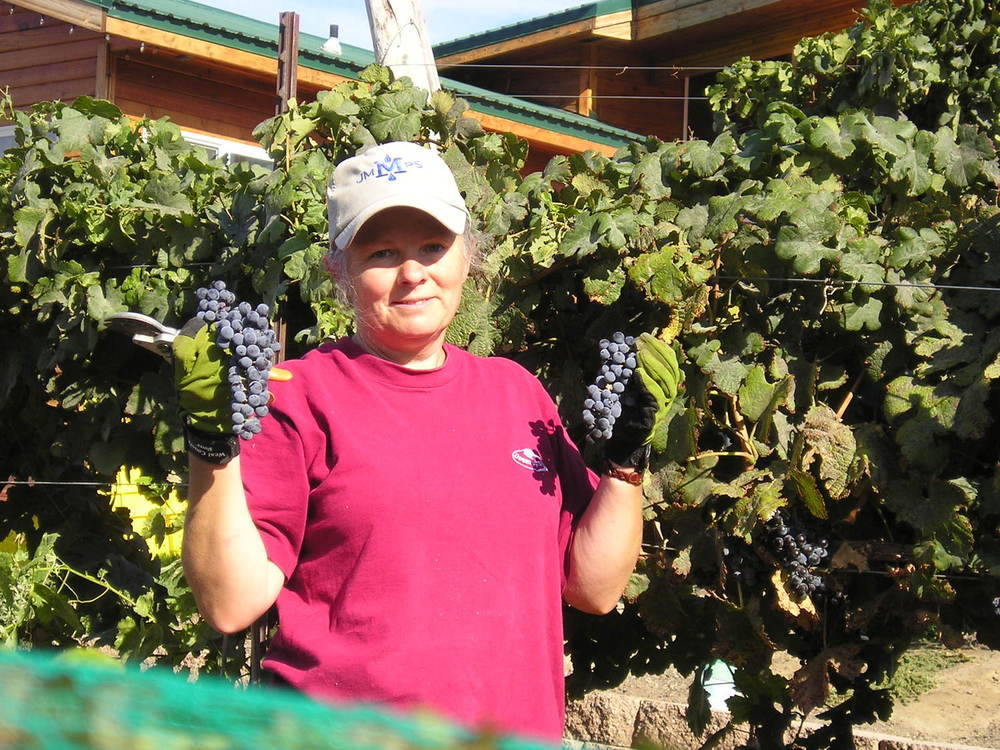 joan at harvest 2006.jpg