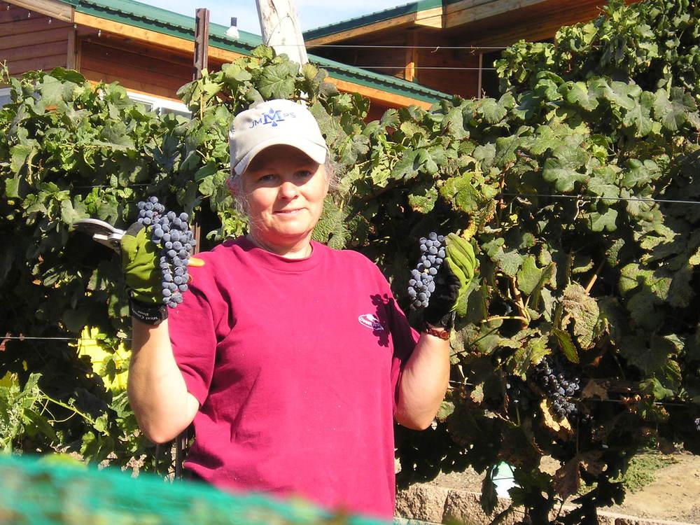 joan at harvest 2006.jpg