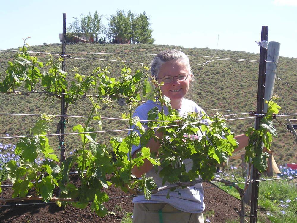 joan training vineyard 2004.jpg