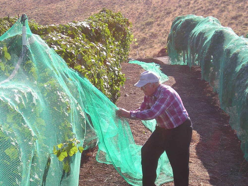 john skidmore removes netting 2006.jpg