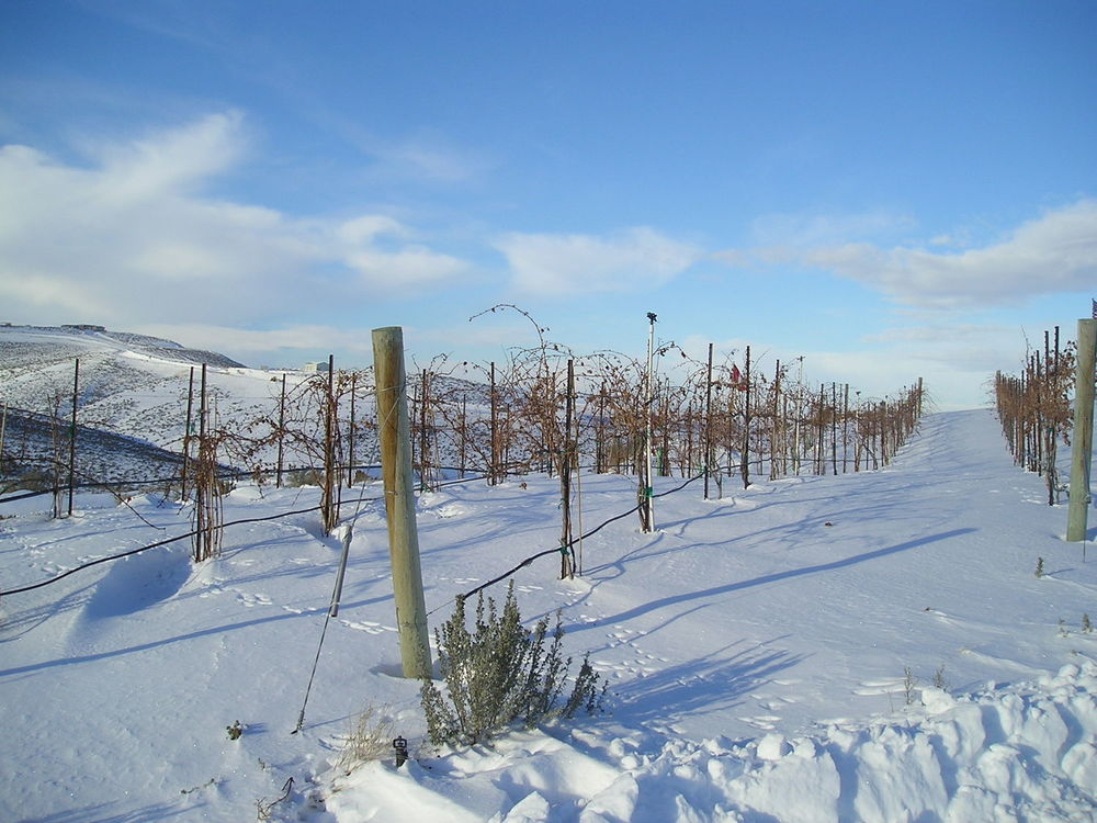 the vineyard in snow 2004.jpg