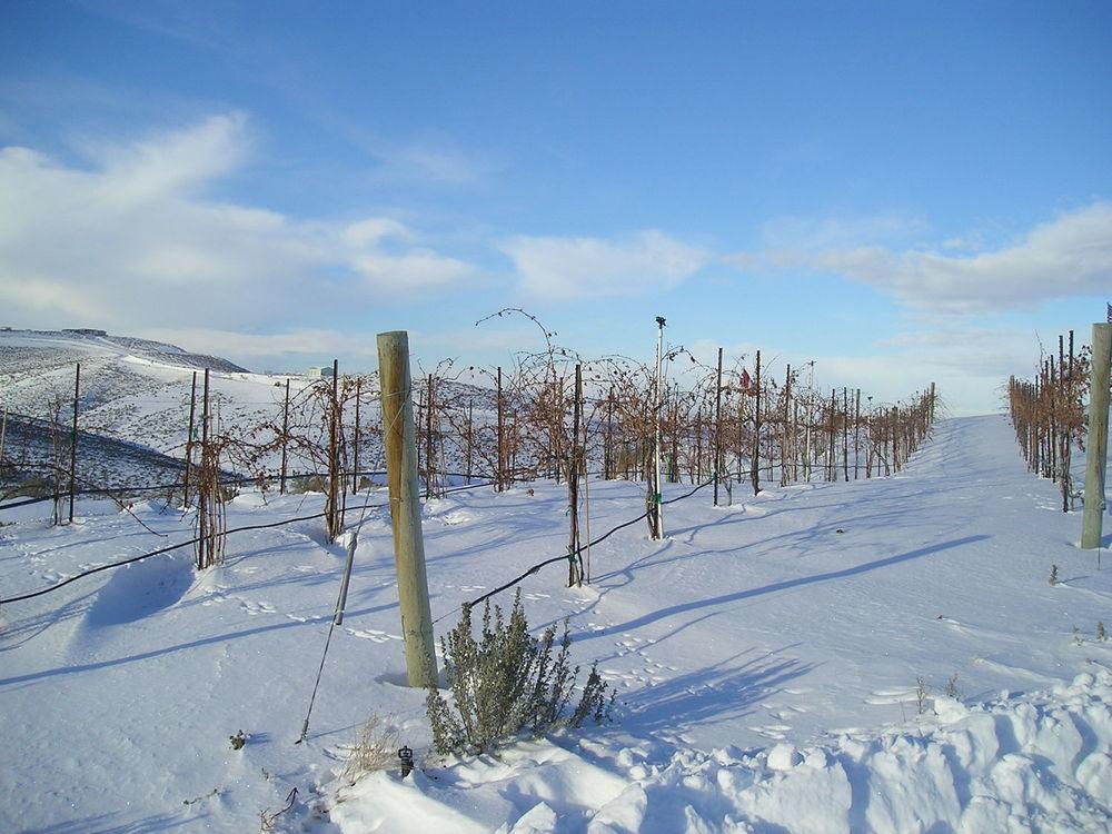 the vineyard in snow 2004.jpg