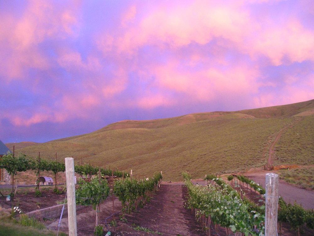 sunrise over vineyard 06.jpg