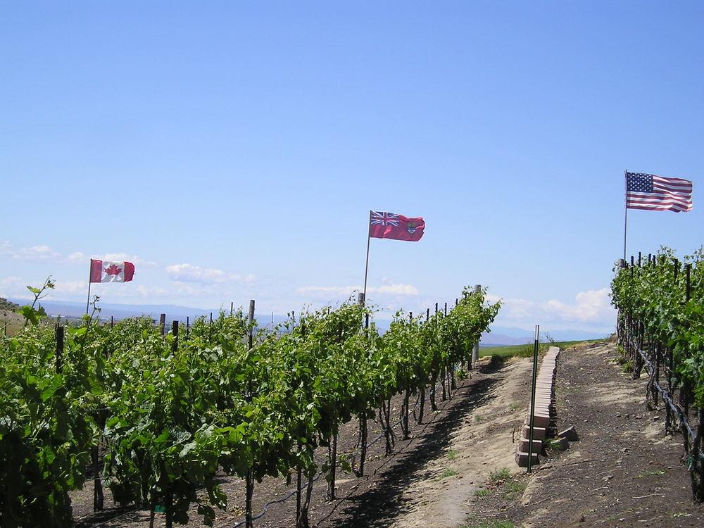 vineyard and flags 2006.jpg