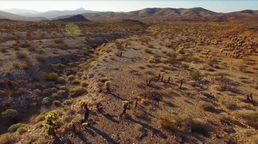 THE WILDLANDS CONSERVANCY // mojave trails national monument