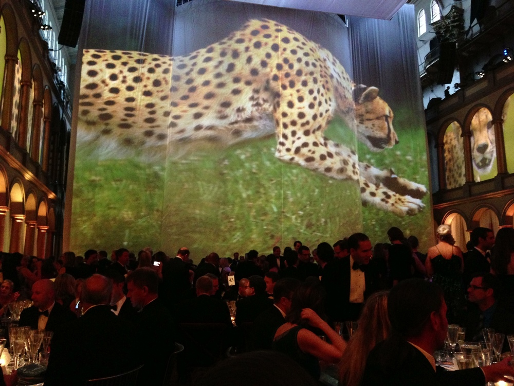 Cheetahs on the Edge   played at National Geographic Magazine's 125th Anniversary Gala held at the Building Museum in Washington, DC. on June,13th 2013