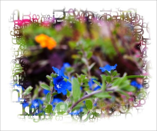 onone-flowers