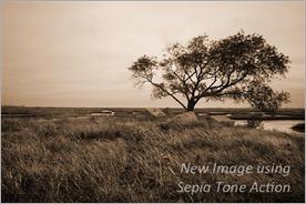 DSC_0126B-4--sepia - Copy