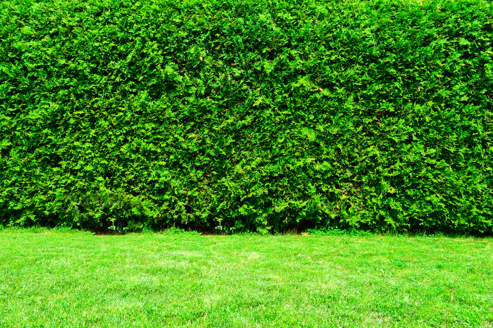 Charmant Landscaping Ideas: Plant A Living Privacy Fence