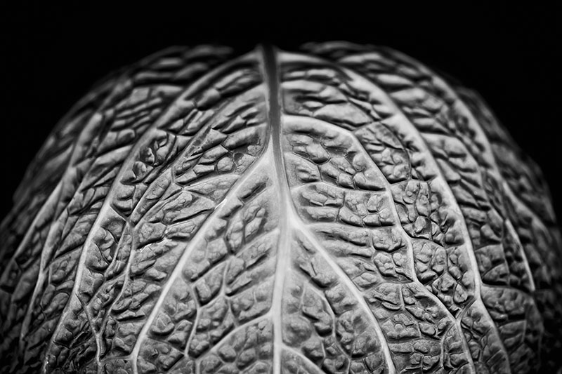 cabbage brain