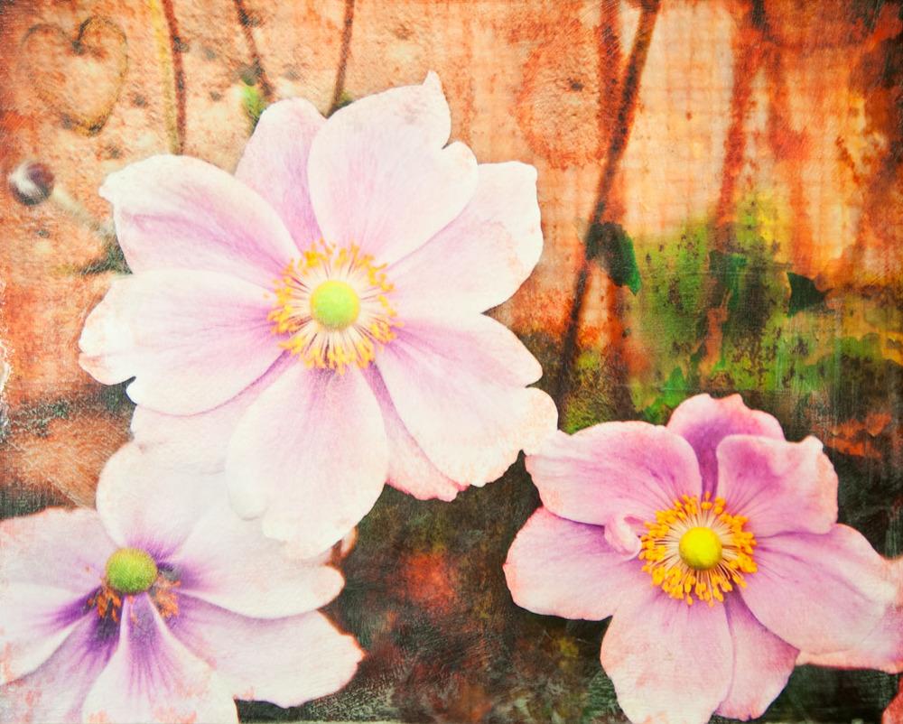 Japanese Anemone #3.jpg