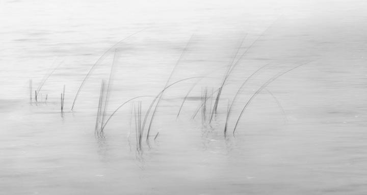 Reeds-1.jpg
