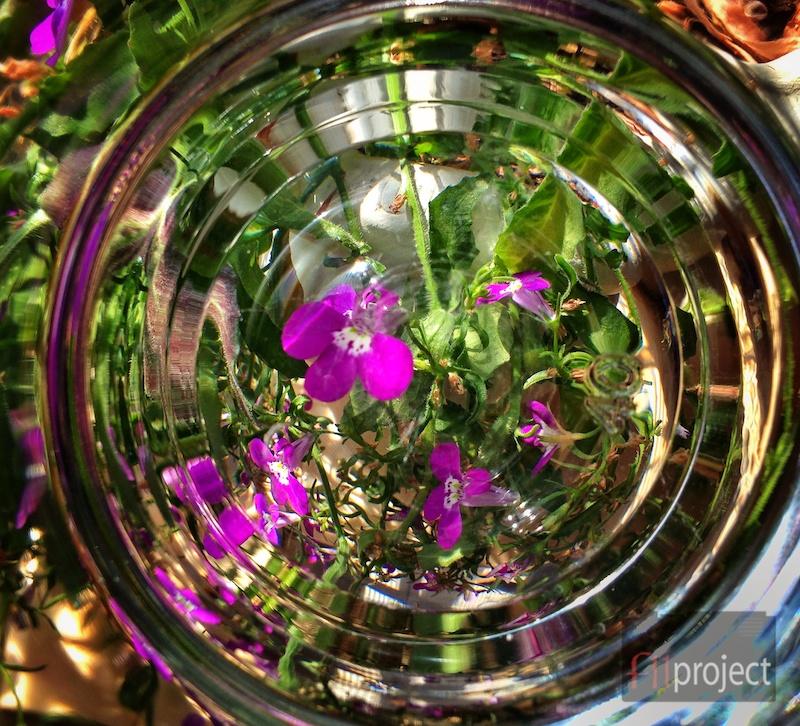 AU_Plants_1577.jpg