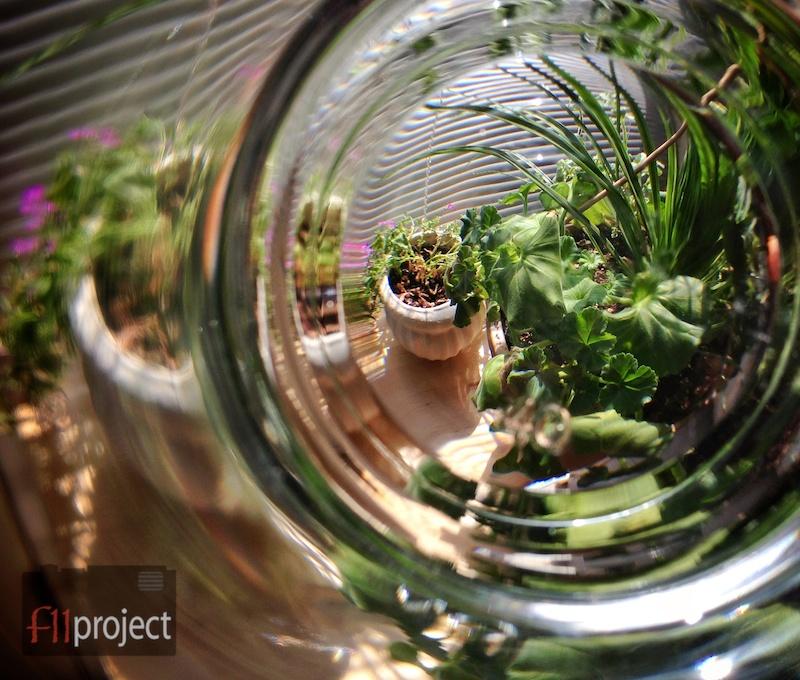 AU_Plants_1560.jpg