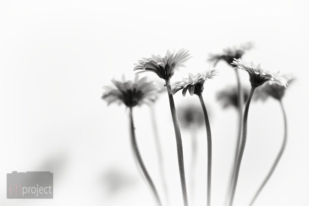 AU_Flowers_4443.jpg