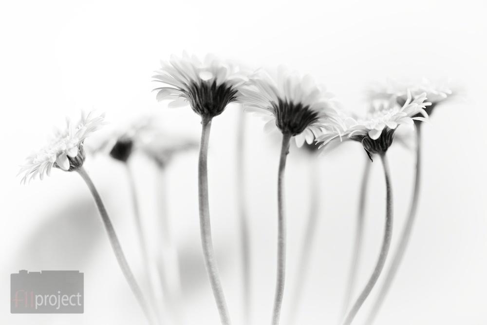 AU_Flowers_4441.jpg