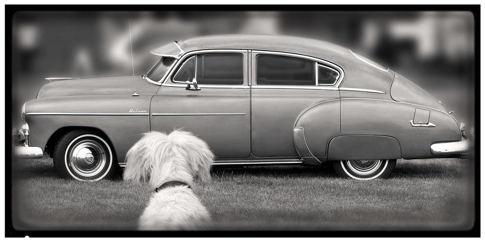 deluxe dog.jpg