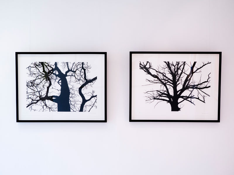 'Raven's Seat and Noble Snag' Screen print (Framed) 34.6 x 26.1 in. (88 x 66.5cm) Installation view