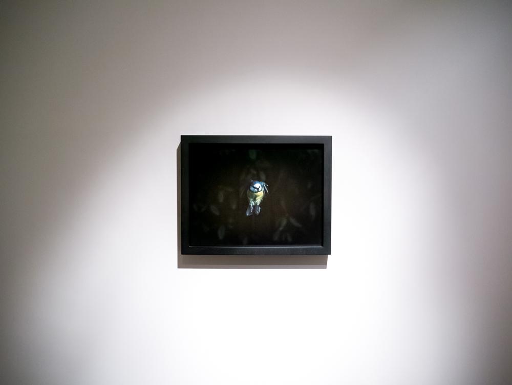 Andrew Bruce Illuminating Silence Installation-4.jpg