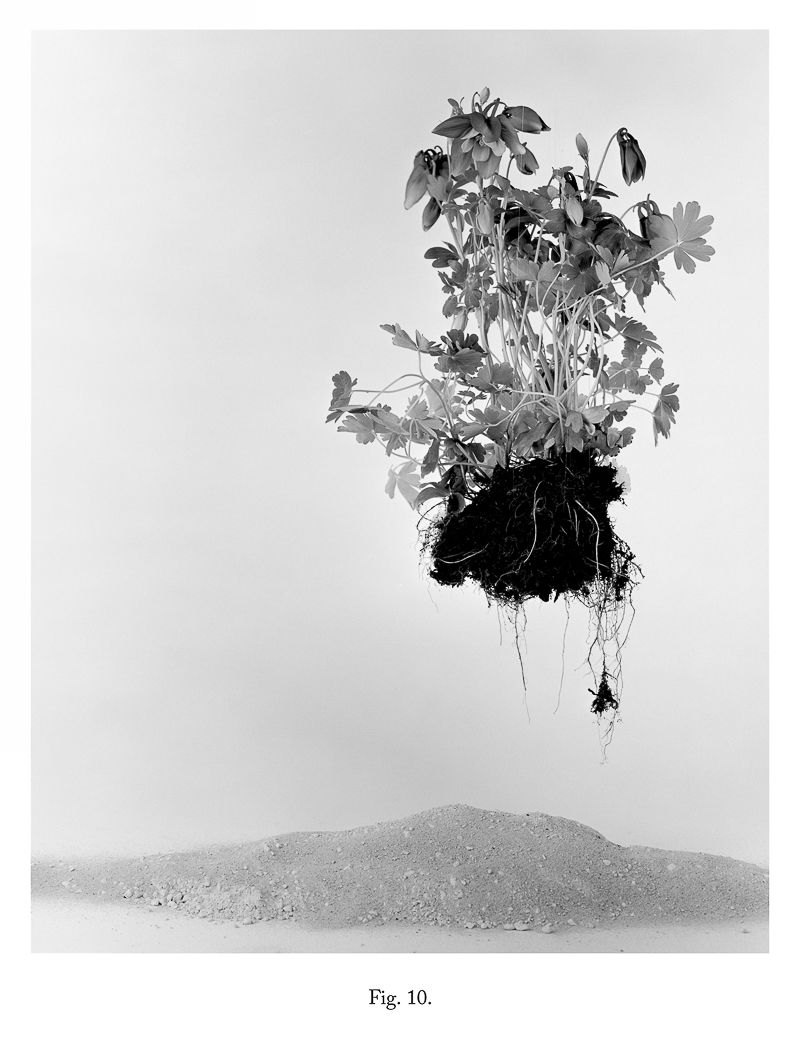 Fig 10, 2013 From the series As IF It Were Bromide Print (Framed) 30.5 x 25.4 cm 12 x 10 in