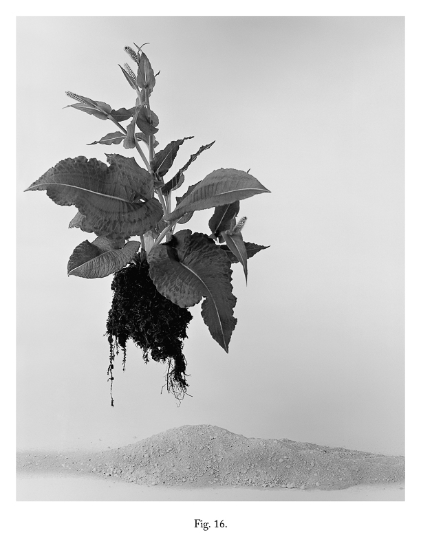 Fig 16, 2012 From the series As IF It Were Bromide Print (Framed) 30.5 x 25.4 cm 12 x 10 in VJE0011 ENQUIRE ABOUT THIS WORK