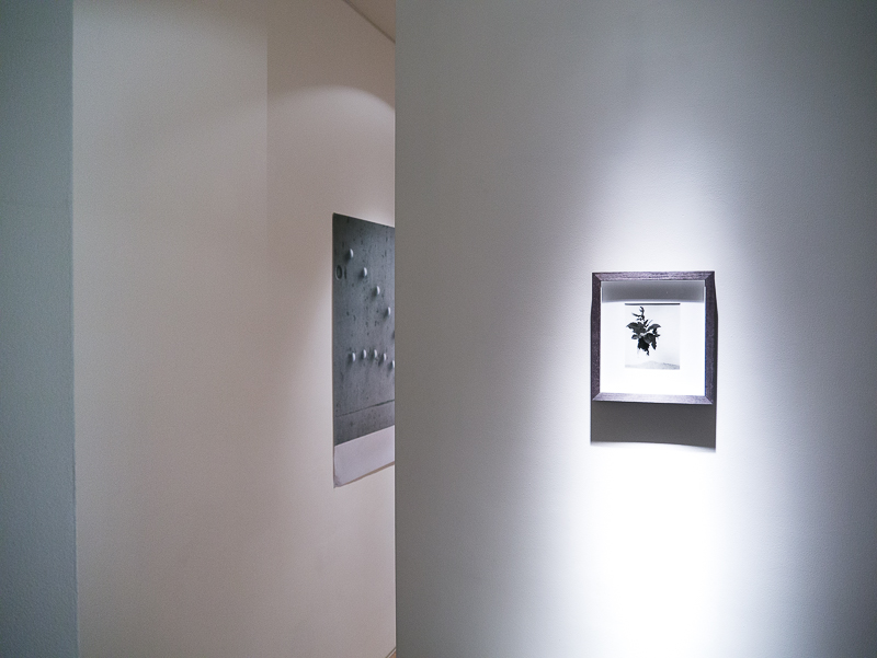 Victoria Jenkins As if It Were Installation View curated by Joe Madeira-12.jpg