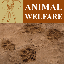 animal welfare program header