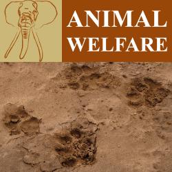 animal welfare program header