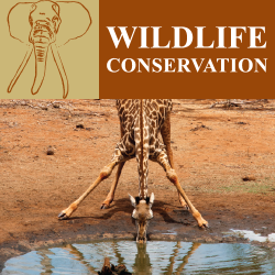 wildlife conservation header