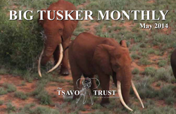 tsavo trust big tusker monthly may 2014