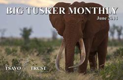 tsavo trust big tusker monthly june 2014