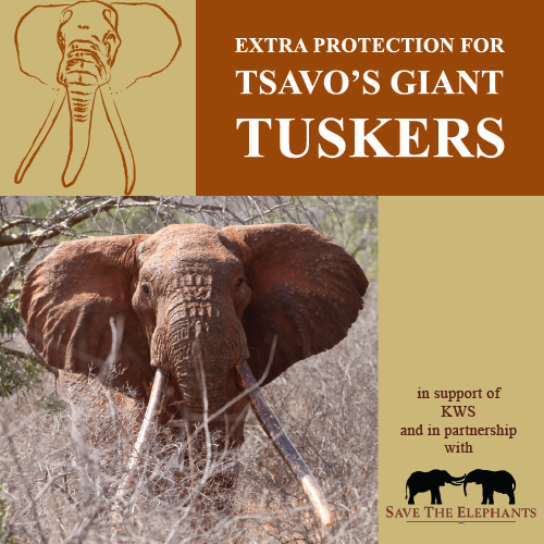 tsavo trust's big tusker project