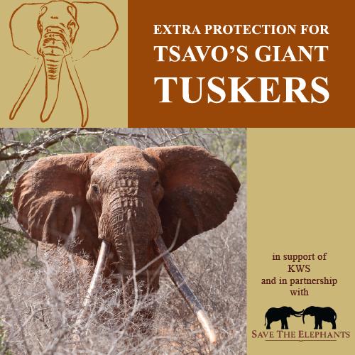 tsavo trust's big tusker project