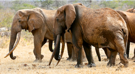 CLICK ON IMAGE TO DOWNLOAD BIG TUSKER REPORT JULY 2016