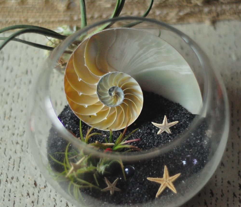 Nautilus Terrarium top.JPG