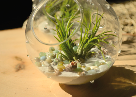 Airplant-Terrarium.png