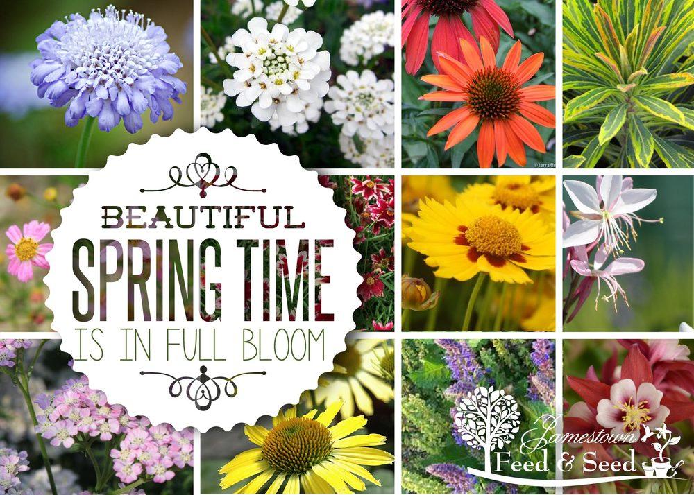 spring flowers ad-01.jpg