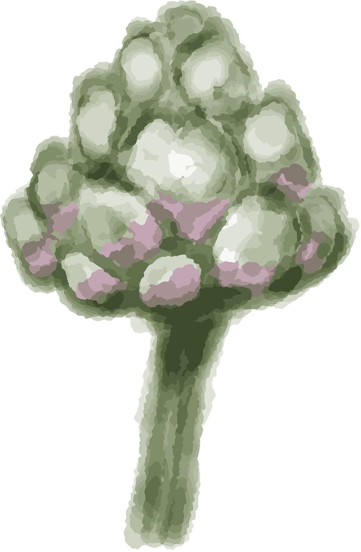 Artichoke. Watercolour.