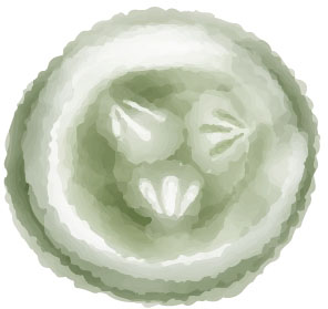 Cucumber. Water-colour illustration. Element for pattern design.